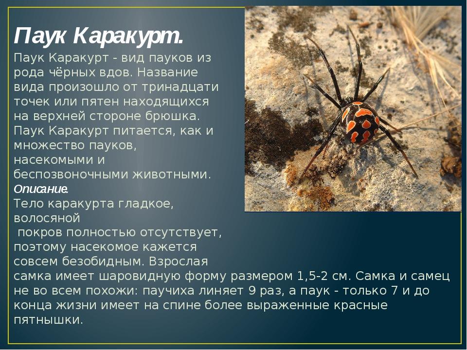 Паук Каракурт. Паук Каракурт - видпауковиз родачёрных вдов. Название вида...