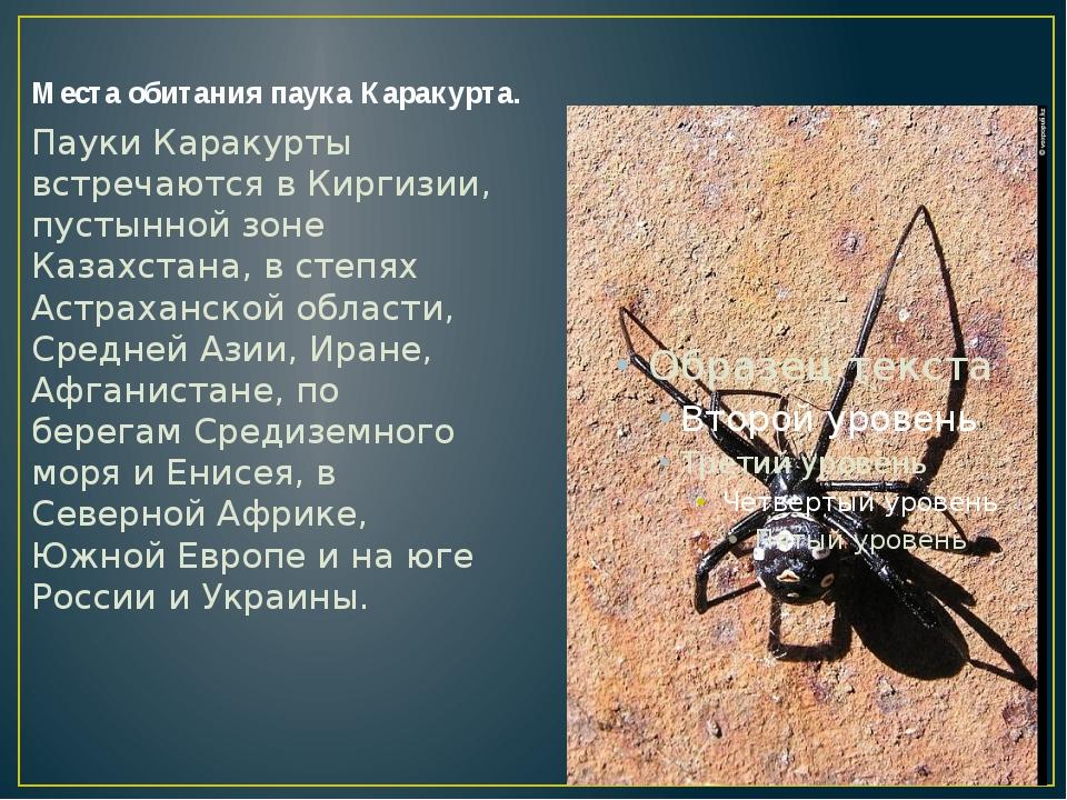 Места обитания паука Каракурта. Пауки Каракурты встречаются в Киргизии, пусты...