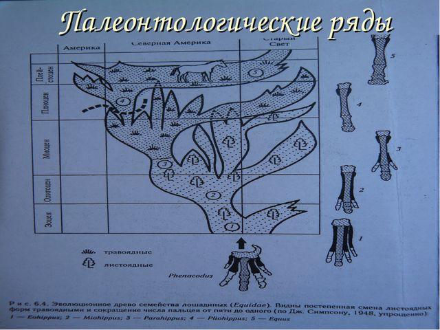 Палеонтологические ряды