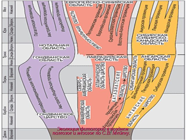 Эволюция фитохорий впозднем палеозое имезозое поС.В.Мейену.