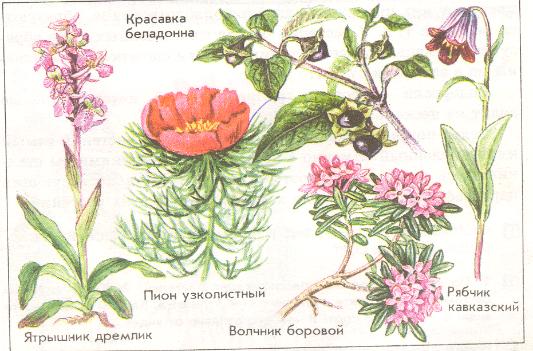 Тема: Половое размножение покрытосеменных растений - Картинк…