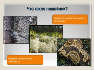 Что такое лишайник? Лишайники произрастают на всех континентах. Их можно найт