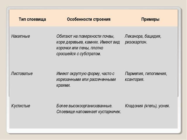 Тип слоевища Особенности строения Примеры Накипные Обитают на поверхности...