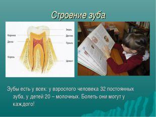 Строение зуба Зубы есть у всех: у взрослого человека 32 постоянных зуба, у де