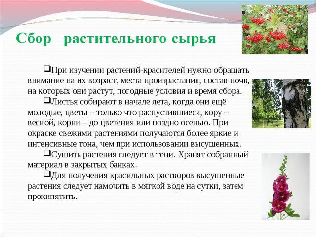 При изучении растений-красителей нужно обращать внимание на их возраст, места...