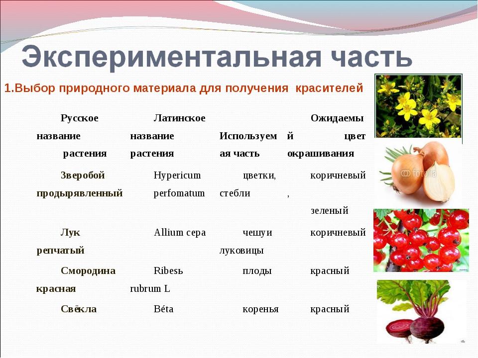 1.Выбор природного материала для получения красителей Русское название растен...