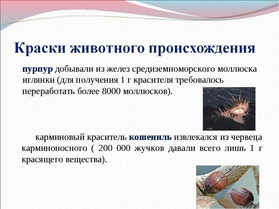 пурпур добывали из желез средиземноморского моллюска иглянки (для получения 1...