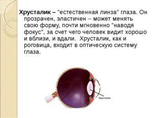 """Хрусталик – """"естественная линза"""" глаза. Он прозрачен, эластичен – может меня"""