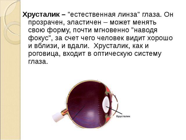 """Хрусталик – """"естественная линза"""" глаза. Он прозрачен, эластичен – может меня..."""