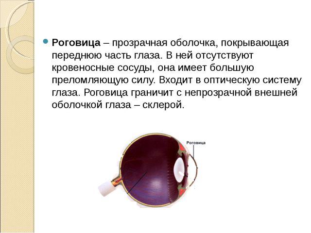 Роговица – прозрачная оболочка, покрывающая переднюю часть глаза. В ней отсу...