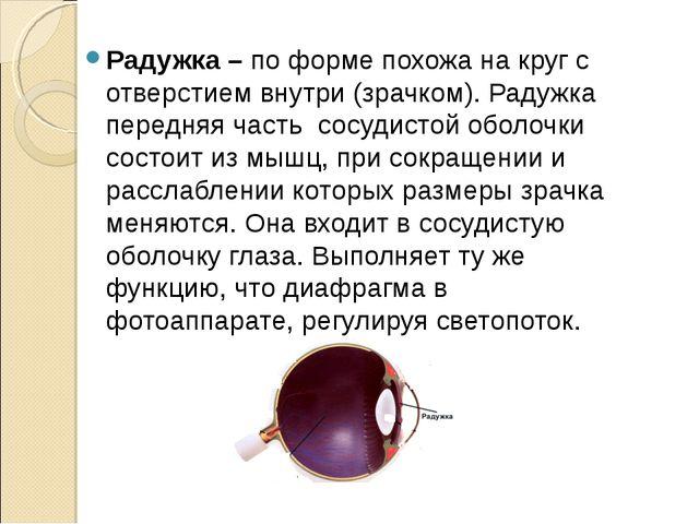 Радужка – по форме похожа на круг с отверстием внутри (зрачком). Радужка пер...