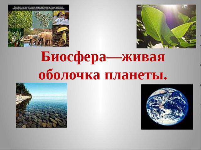 Биосфера—живая оболочка планеты.