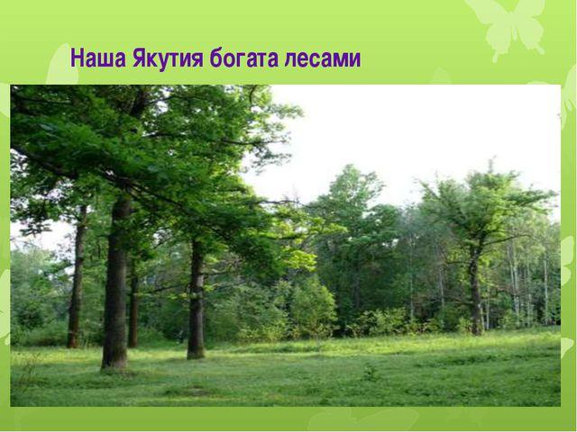 Наша Якутия богата лесами
