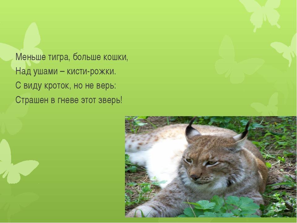 Меньше тигра, больше кошки, Над ушами – кисти-рожки. С виду кроток, но не вер...