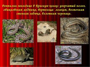 Рептилии занесёные в Красную книгу: узорчатый полоз, обыкновеная медянка, ве