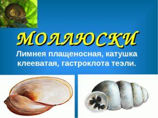 МОЛЛЮСКИ Лимнея плащеносная, катушка клееватая, гастроклота теэли.