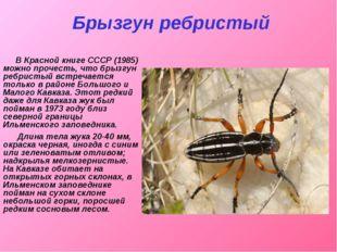 Брызгун ребристый В Красной книге СССР (1985) можно прочесть, что брызгун реб