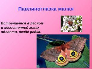 Павлиноглазка малая Встречается в лесной и лесостепной зонах области, везде р