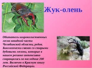 Обитатель широколиственных лесов западной части Челябинской области, редок.