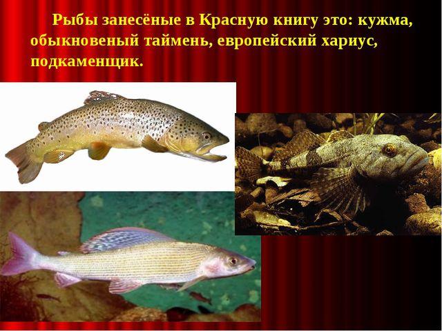 Рыбы занесёные в Красную книгу это: кужма, обыкновеный таймень, европейский...