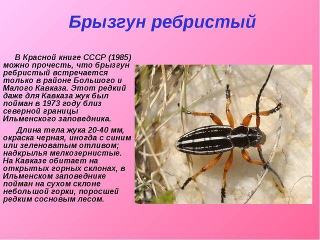 Брызгун ребристый В Красной книге СССР (1985) можно прочесть, что брызгун реб...