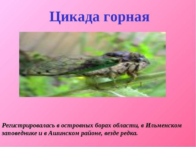 Регистрировалась в островных борах области, в Ильменском заповеднике и в Аши...