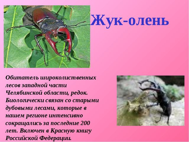 Обитатель широколиственных лесов западной части Челябинской области, редок....