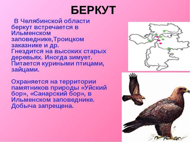 БЕРКУТ  В Челябинской области беркут встречается в Ильменском заповеднике,Тр...