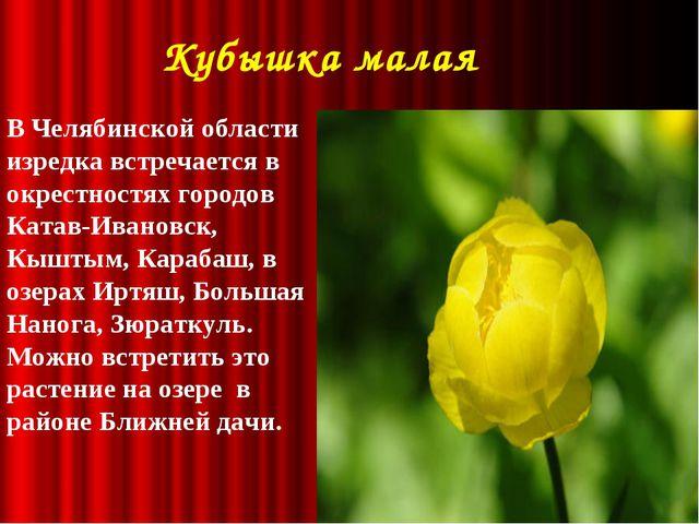 Кубышка малая В Челябинской области изредка встречается в окрестностях город...