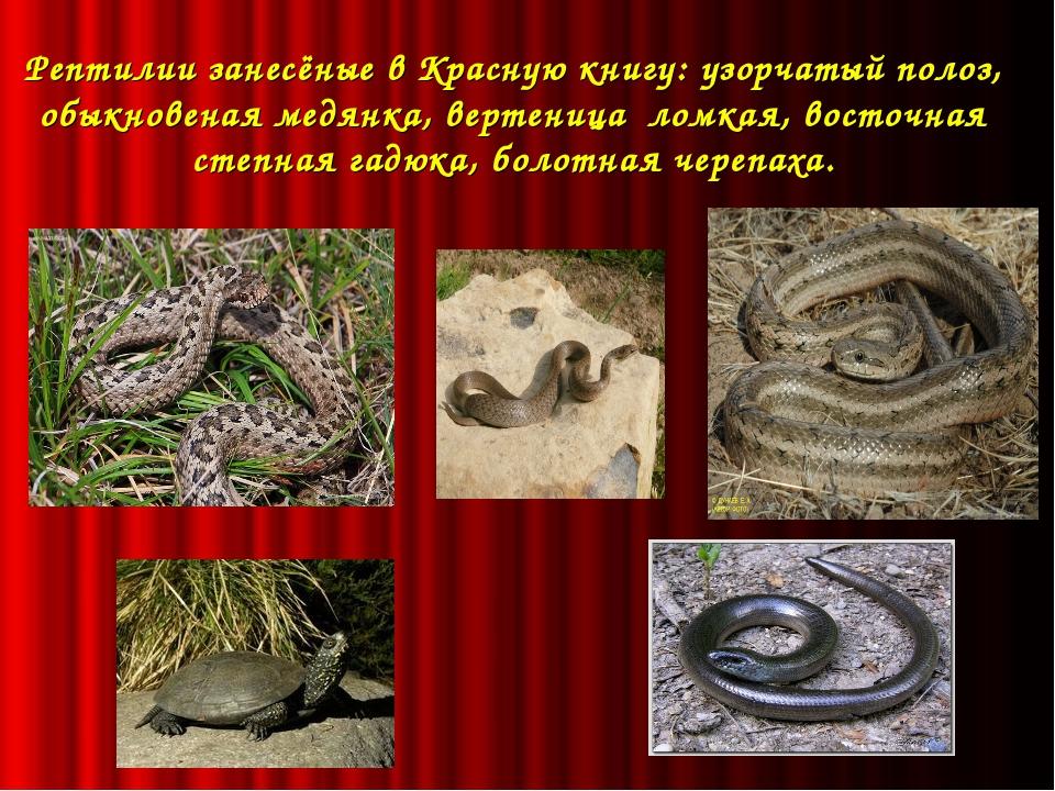 Рептилии занесёные в Красную книгу: узорчатый полоз, обыкновеная медянка, ве...