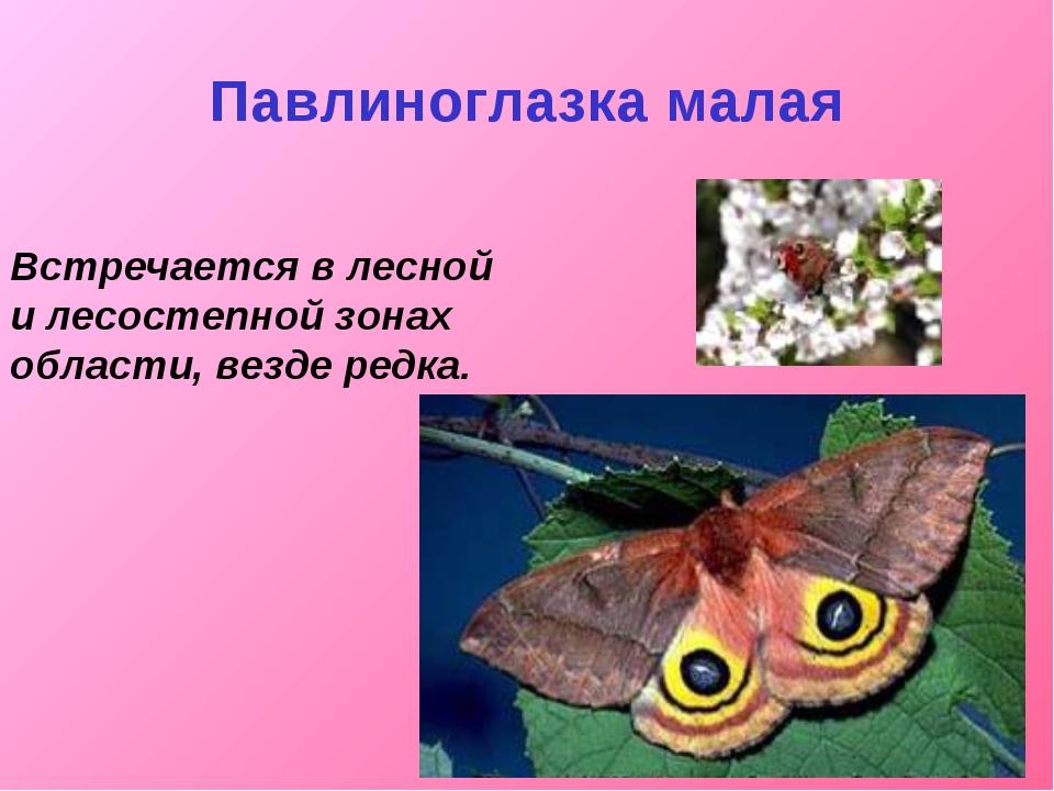Павлиноглазка малая Встречается в лесной и лесостепной зонах области, везде р...
