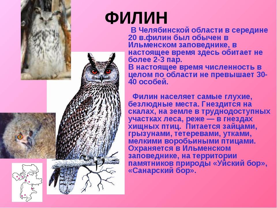 ФИЛИН  В Челябинской области в середине 20 в.филин был обычен в Ильменском з...