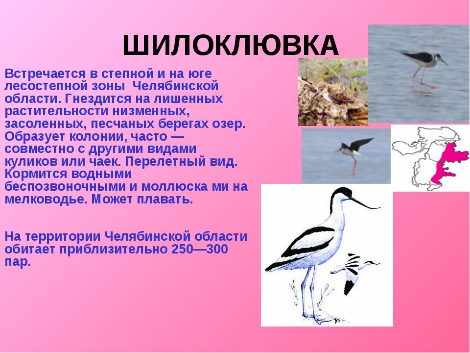 ШИЛОКЛЮВКА Встречается в степной и на юге лесостепной зоны Челябинской област...