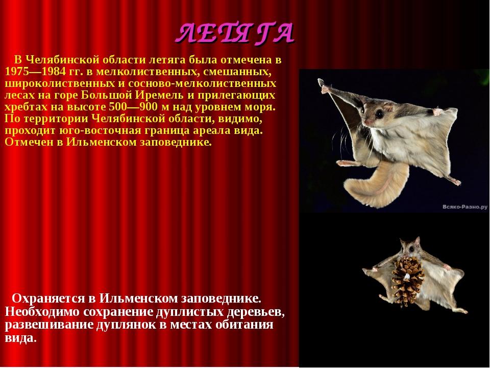 ЛЕТЯГА  В Челябинской области летяга была отмечена в 1975—1984 гг. в мелко...