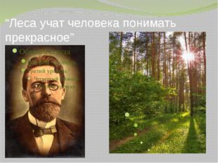 """""""Леса учат человека понимать прекрасное"""" 14"""