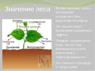 Значение леса Велико значение леса в поглощении углекислого газа, выделении к