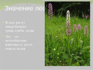 Значение леса В лесу растут лекарственные травы, грибы, ягоды Лес – это место