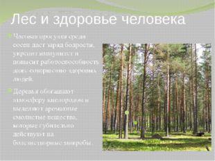 Лес и здоровье человека Часовая прогулка среди сосен даст заряд бодрости, укр