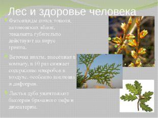 Лес и здоровье человека Фитонциды почек тополя, антоновских яблок, эвкалипта