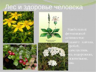 Лес и здоровье человека Наибольшей фитонцидной активностью обладают: клюква,