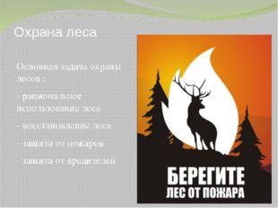 Охрана леса Основная задача охраны лесов : - рациональное использование леса