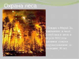 Охрана леса Пожары в Марий Эл, бушевавшие в лесах республики в июле и августе