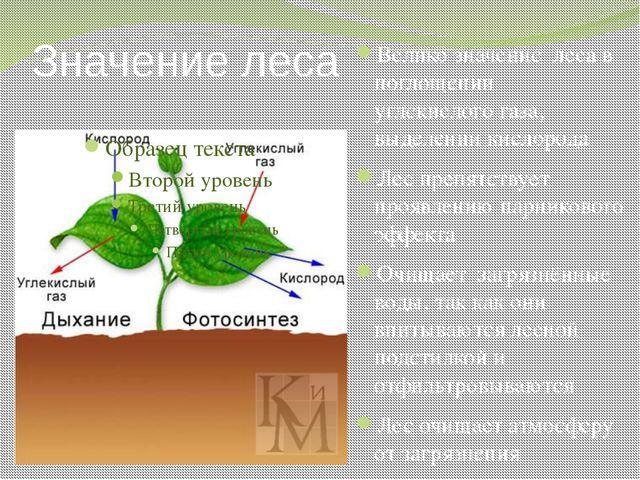 Значение леса Велико значение леса в поглощении углекислого газа, выделении к...
