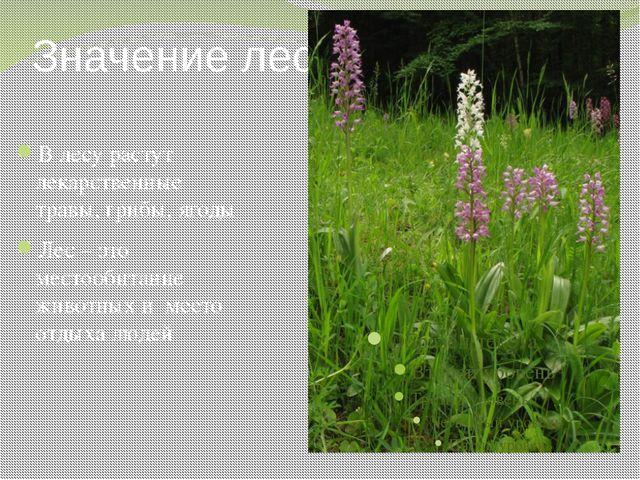 Значение леса В лесу растут лекарственные травы, грибы, ягоды Лес – это место...