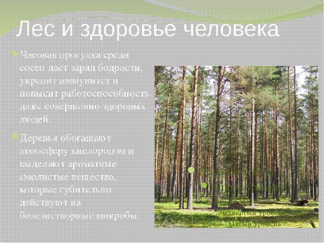 Лес и здоровье человека Часовая прогулка среди сосен даст заряд бодрости, укр...
