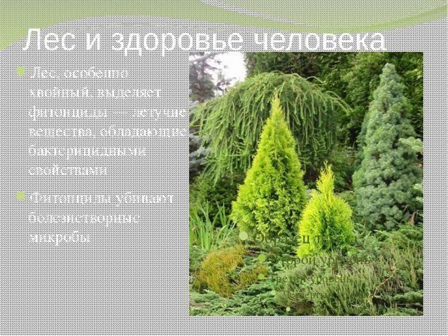 Лес и здоровье человека Лес, особенно хвойный, выделяет фитонциды — летучие в...