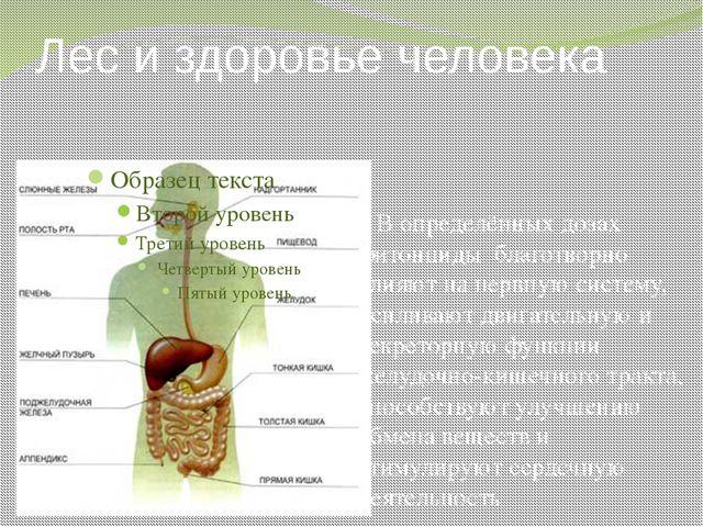 Лес и здоровье человека В определённых дозах фитонциды благотворно влияют на...
