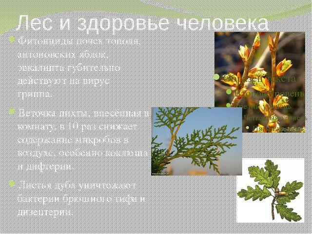 Лес и здоровье человека Фитонциды почек тополя, антоновских яблок, эвкалипта...