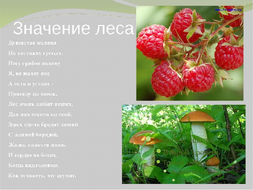 Значение леса Душистая малина На кустиках густых. Ищу грибов поляну Я, не жал...