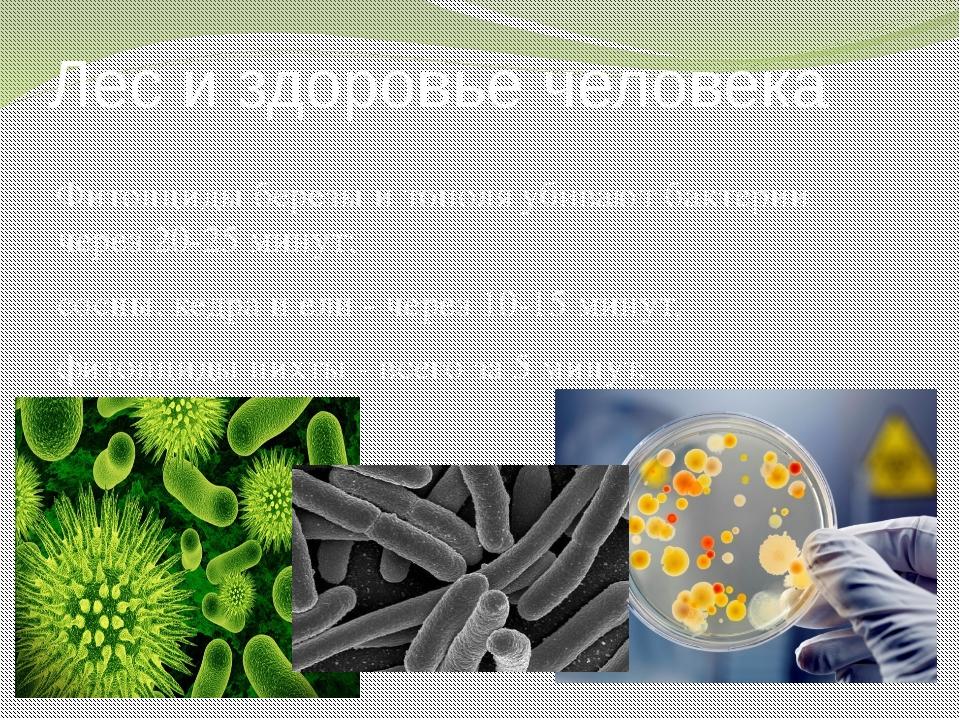 Лес и здоровье человека Фитонциды березы и тополя убивают бактерии через 20-2...